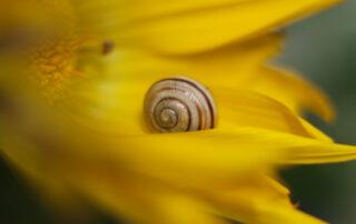 Foto: Naturschönheiten aus dem Saar-Pfalz-Kreis, fotografiert von Gisela Katharina Wilhelm